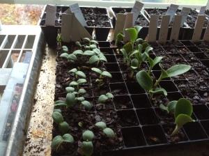 Starter plants - Year 3